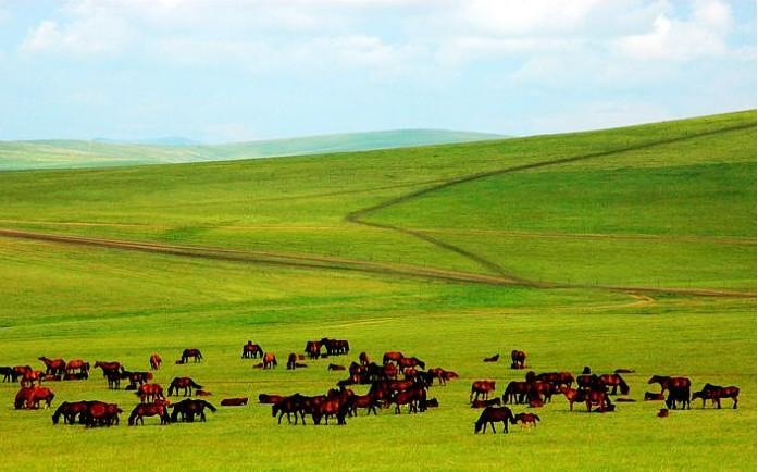 浙西大草原